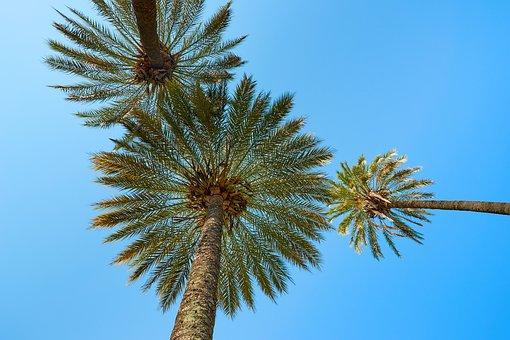 Palm Trees, South Sea, Exotic, Beach, Samoa, Holiday