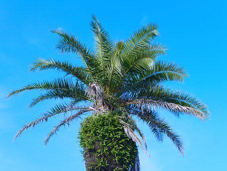 Palm Trees, Blue Sky, White, Green, Blue, Sky Blue