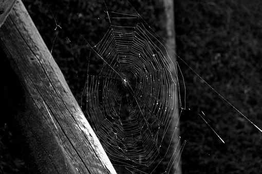 Cobweb, Spin, Close, Nature, Network, Insect, Threads