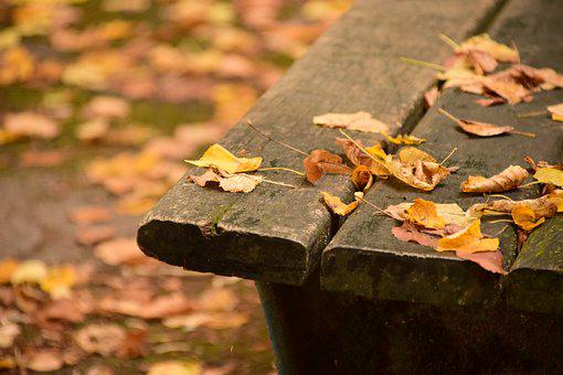 Bank, Wooden Bench, Bench, Nature, Rest, Click, Forest