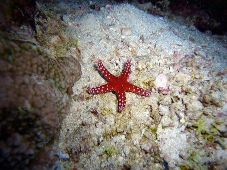 Diving, Underwater, Water, Sea, Starfish
