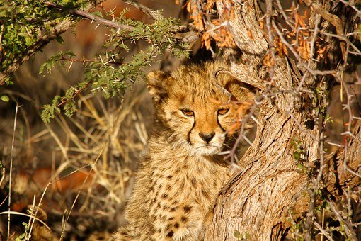 Leopard, Spots, Cub, Animal, Nature, Wildlife, Cat