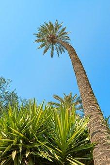 Palm, South Sea, Exotic, Caribbean, Sky, Travel