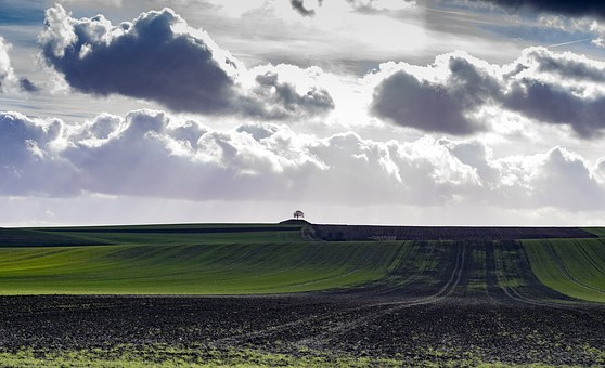 Field, Fields, Agriculture, Landscape, Green, Nature