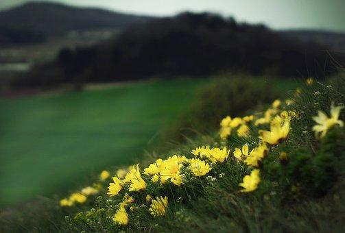 Landscape, Hlavacek, Protected Plant, The Slope, Hill
