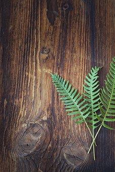 Fern, Green, Plant, Wood, Dark, Sonnenverbrannt, Close