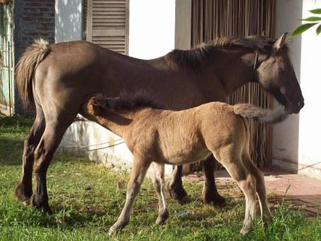 Animals, Horses, Colt, Tenderness, Beauty, Nature