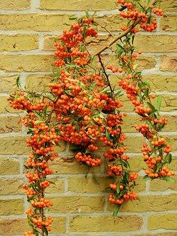 Flower, Blossom, Bloom, Wall, Brick Wall, Brick