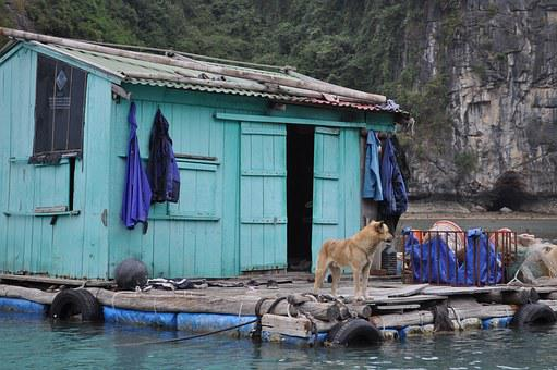 Hut, Fisherman's Hut, Floating Village, Halong Bay