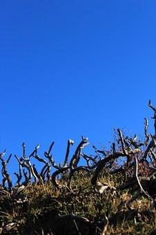 Deadwood, Dwarf Tree, Blue Sky, Dry, Green, Sky, Hill
