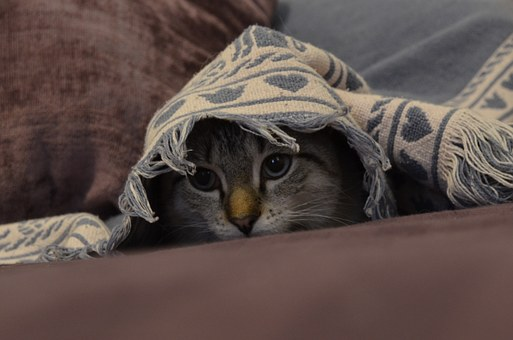 Cat, Kitten, Cute, Pet, Feline, Kitty, Portrait, Eyes