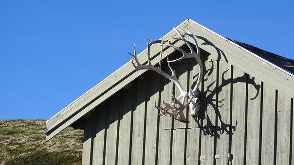 Bouda, Antlers, Reindeer Antlers, Reindeer, Skull