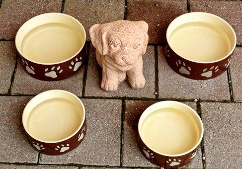 Animal, Dog Bowl, Bowl, Food, Water, Drink, Dog, Dogbar