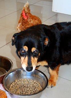 Dog, Chicken, Animals, Bowl, Fressnapf, Eat