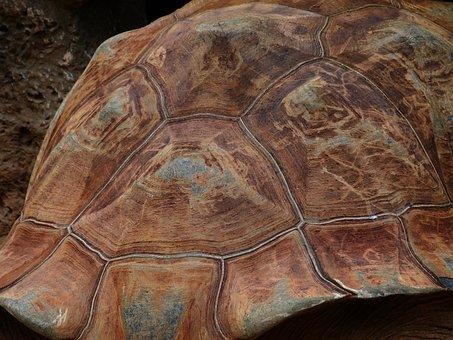 Turtle, Panzer, Tortoise Shell, Pattern, Giant Tortoise