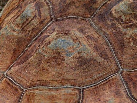 Turtle, Panzer, Armor, Tortoise Shell, Pattern