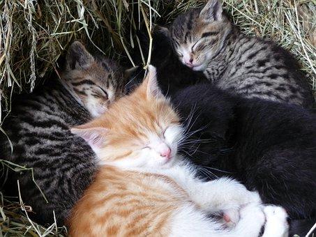 Animals, Cat, Pet, Young Cat, Kitten, Sleep, Snuggle