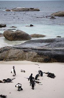Penguins, South Africa, Sea, Ocean, Sand, Beach, Water