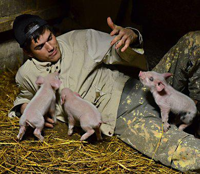 Country Life, Pig, Men's, Piggy, Pets, Livestock