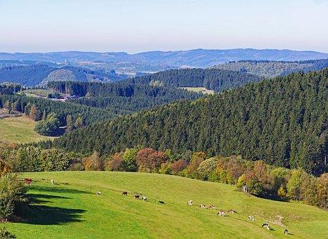 Sauerland, Homert, Highlands, Schomberg, Forest