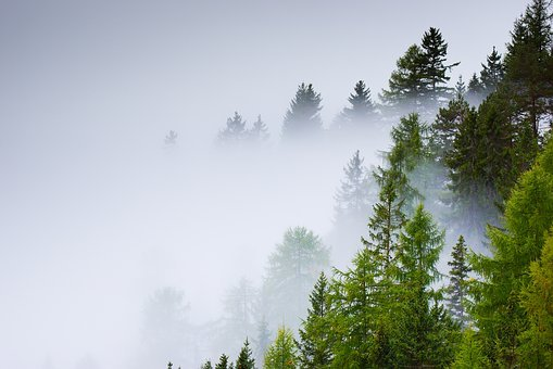 Forest, Selva, Fog, Trees, Nature, Tree, Autumn, Trunk