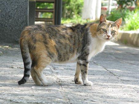 Cat, Homeless Cat, Homeless, Animal, Fur, Cute