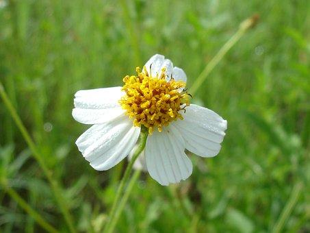 Flower, White Flower, Nature, Spring, Garden