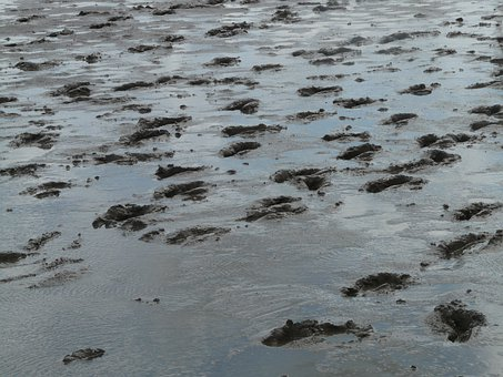 Mudflat Hiking, Traces, Hike, Wadden Sea, Ford, Schlick