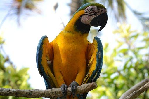 Bird, From, Paradise, Ara, Parrot
