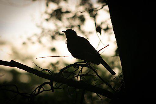 Bird, Branch, Morning, Nature, New Zealand, Silhouette