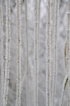 Aesthetic, Hoarfrost, Weeping Willow Close-up