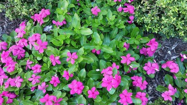 Garden, Plant, Green, Nature, Landscape, Flowers