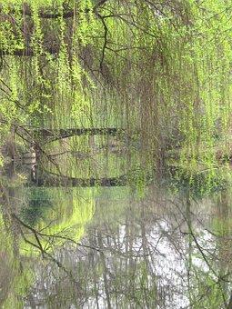 Weeping Willow, Tiergarten, Berlin, Bridge, Waters