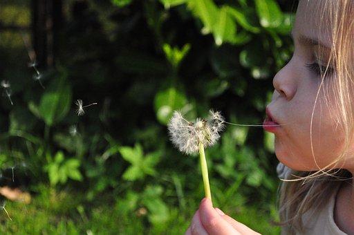Blowball, Dandelion, Girl, Blowing, Flower, Wind