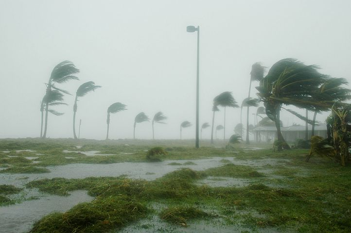 Key West, Florida, Hurricane Dennis, Storm, Wind, Windy