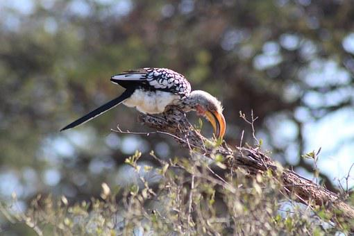 Bird, Africa, Safari, Animal, Birds, Nature