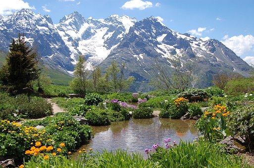 Hautes Alpes, Cervical Lautaret, Garden, Alps