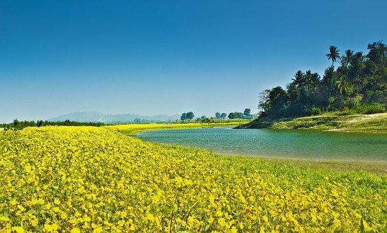 Farming, Agriculture, Countryside, Farm, Flock