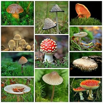 Mushrooms, Collage, Autumn, Forest, Forest Floor, Moss