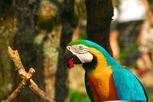 Parrot, Zoo, Bird, Beak, Ara, Blue, Colorful