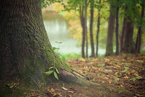 Tree Trunk, Forest Floor, Trunk, Roots, Forest, Nature