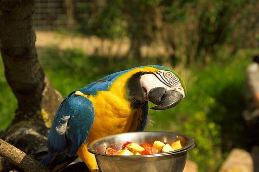 Parrot, Zoo, Animal Park, Colors, Ara