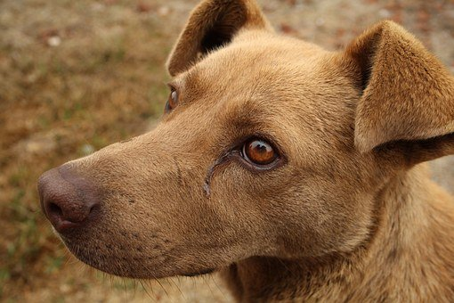 Canine, Sad Dog, Stray Dog, Race, Abandoned, Sick Dog