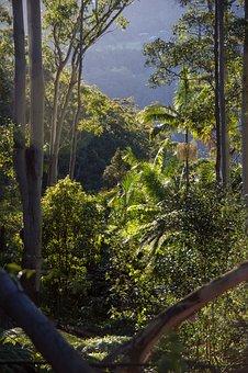 Rain Forest, Forest, Australia, Queensland, Gum Trees
