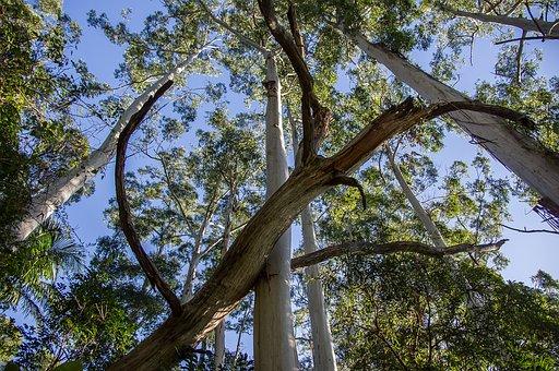 Trees, Fallen Tree, Blue Sky, Rain Forest, Forest