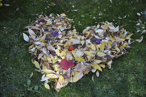 Leaves, Fall Foliage, Golden Autumn