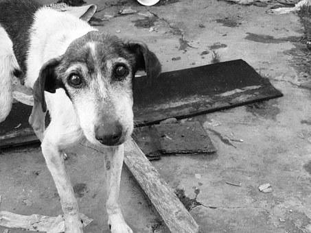Dog, Sad, Stray Dog, Look, Abandoned, Man's Best Friend