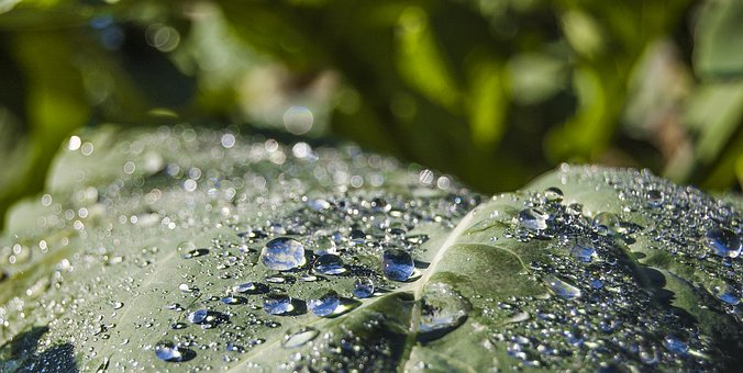 Dawn, Clouds, Dew, Sky, Good Morning, Ray, Water, Drops