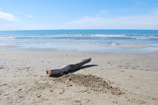 Beach, Driftwood, Deadwood