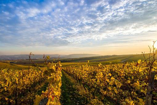 Landscape, Sky, Vineyards, Hill, Sun, Clouds, Nature
